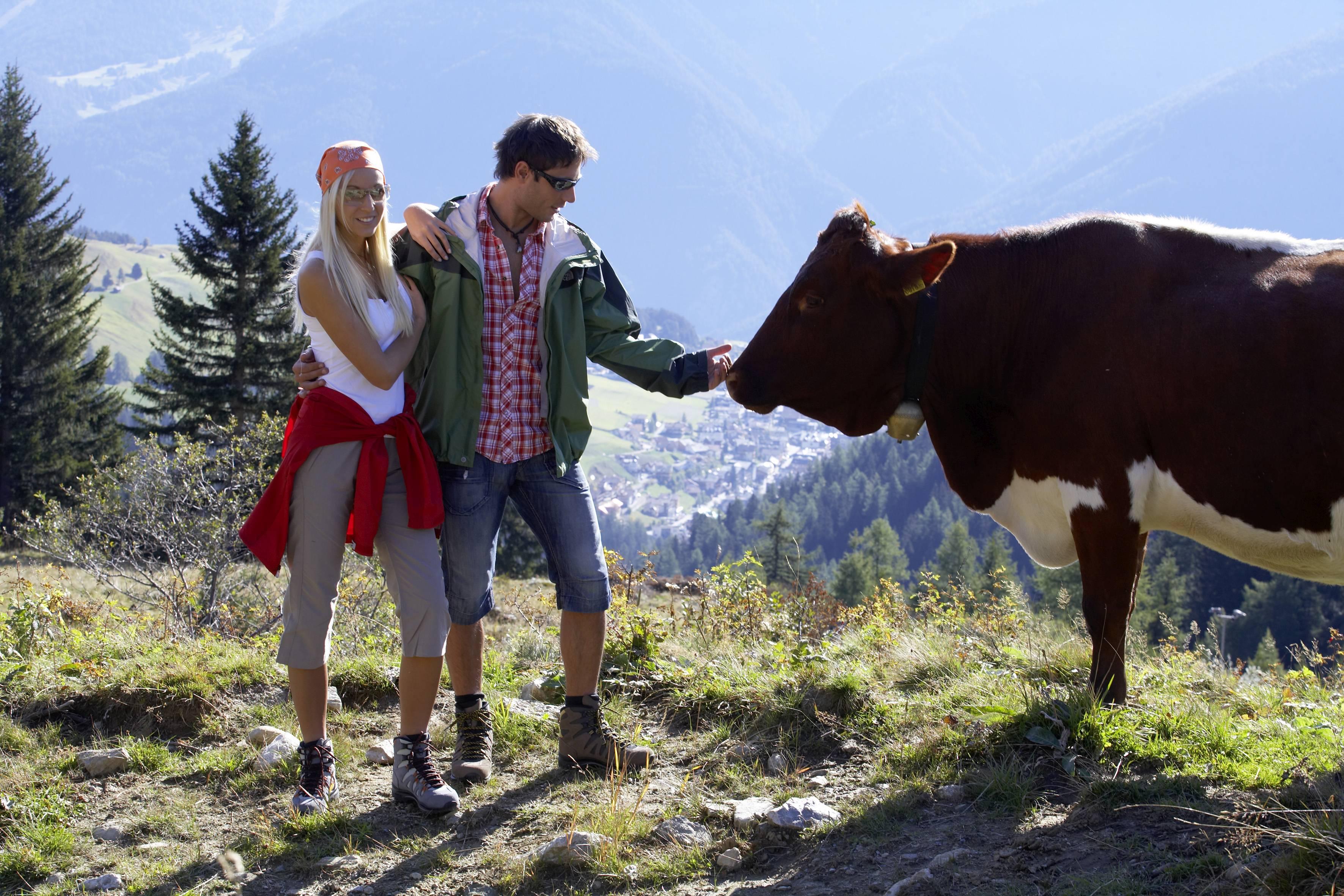 Alpenlandschaft Tirol